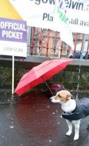 Dog on strike